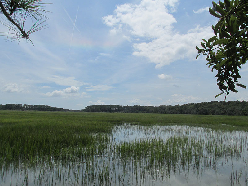 park_wormsloe_marsh02_web
