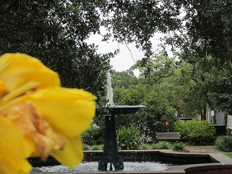 square_columbia_fountainflower01_web